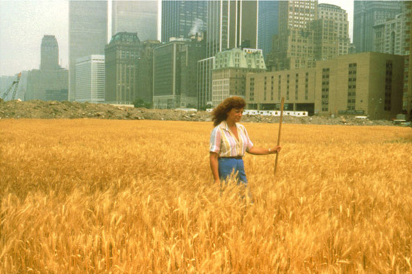 Wheatfield - A Confrontation,1982, by Agnes Denes