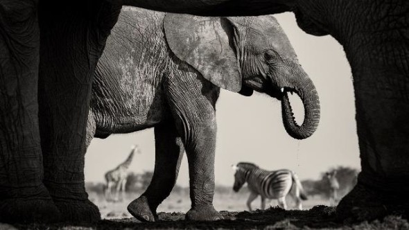 Natural frame. © Morkel Erasmus and Natural History Museum