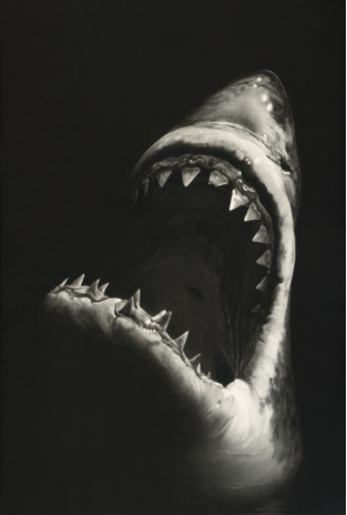 Roberto Longo Brooklyn/New York 1953 Untitled (Shark 7) 2008 Charcoal on mounted paper. 228.6 x 152.4 cm (frame dimension 240 x 163 cm). Framed under glass. Monogrammed and dated 'RL' (joined) '08'. Estimated price €400.000
