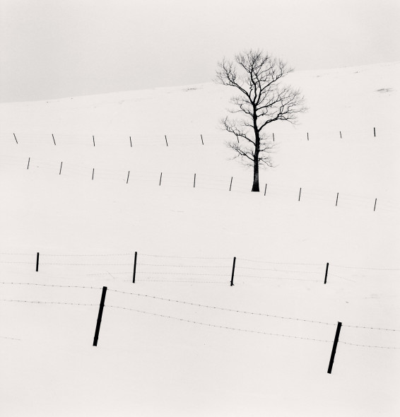 Michael Kenna, Tree and Twenty Eight Posts, Teshikaga, Hokkaido, Japan. Fotografia, 2013 copyright © Michael Kenna GALLERIA DELL'INCISIONE