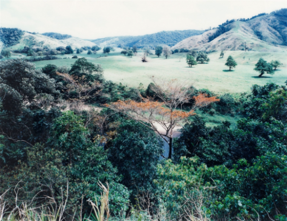Thomas Struth Geldern 1954 Paradies 5, Daintree, Australien 1998 Chromogenic print, face-mounted to plexiglass. 134 x 174.5 cm (176.5 x 214 cm frame). In artist's frame. Artist's label, thereon signed in pencil and typewritten dated, titled and editioned, on the reverse of the frame. Print 2 from an edition of 10. - Slight shift of color due to age. Estimated price €35.000 - €40.000
