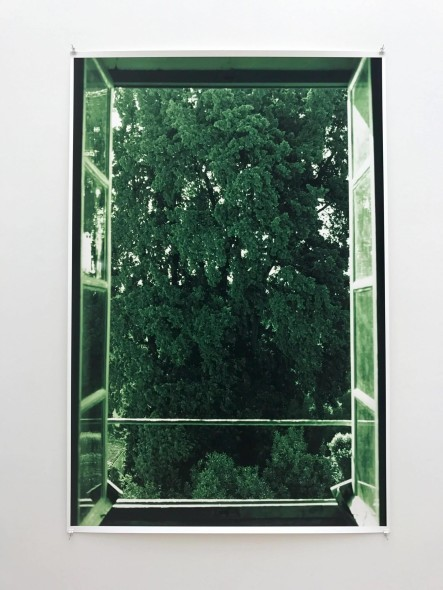 WF, tree filling window (2002)