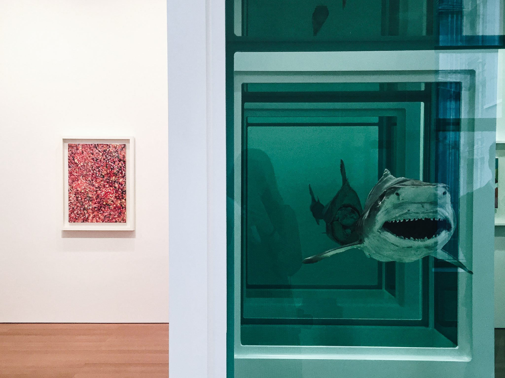 "Damien Hirst ""Visual Candy and Natural History"" - Gagosian Hong Kong (foto Giulia Manfieri 