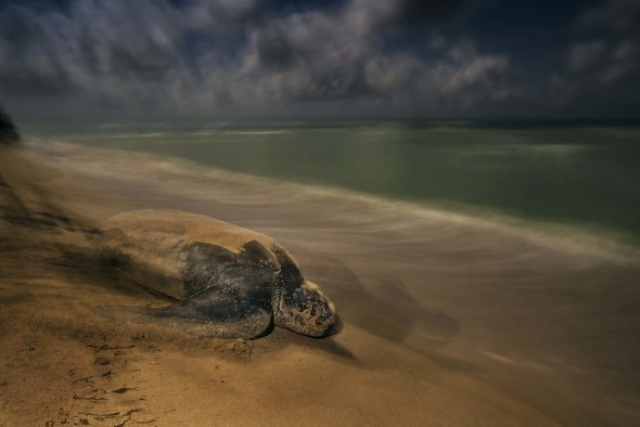 turtle- wildlife- photographer
