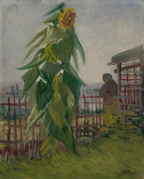 Allotment with Sunflower Vincent van Gogh (1853 - 1890), Paris, July 1887 oil on canvas, 43.2 cm x 36.2 cm Credits (obliged to state): Van Gogh Museum, Amsterdam (Vincent van Gogh Foundation)